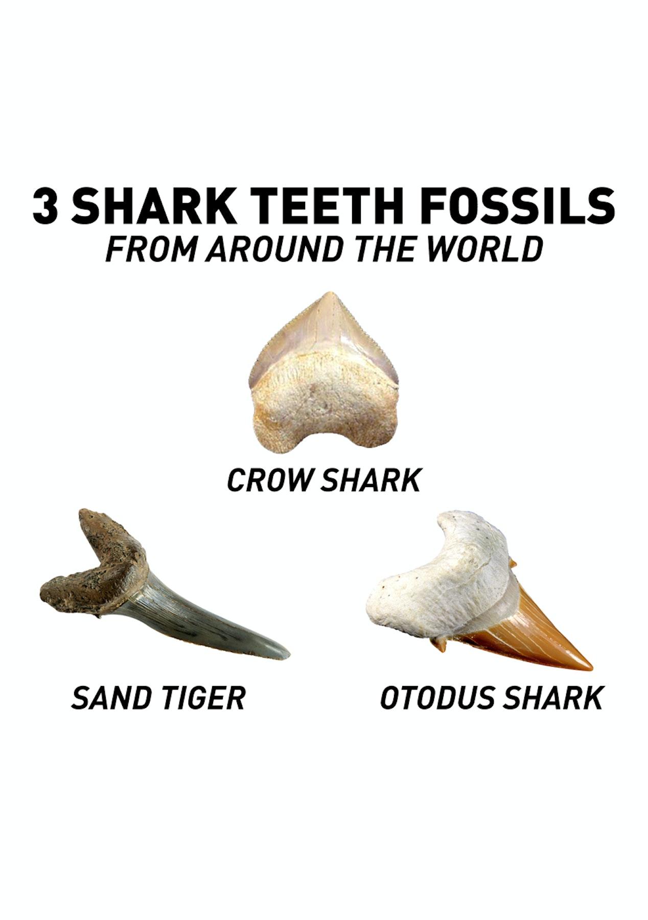 National Geographic - Shark Dig Kit