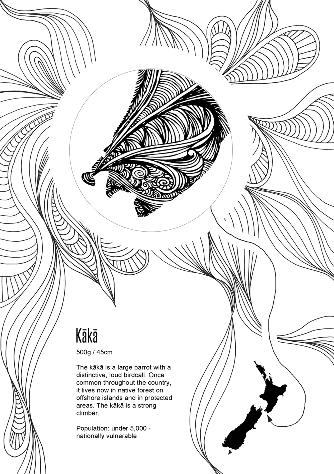 NZ Native Birds Adult Colouring Book