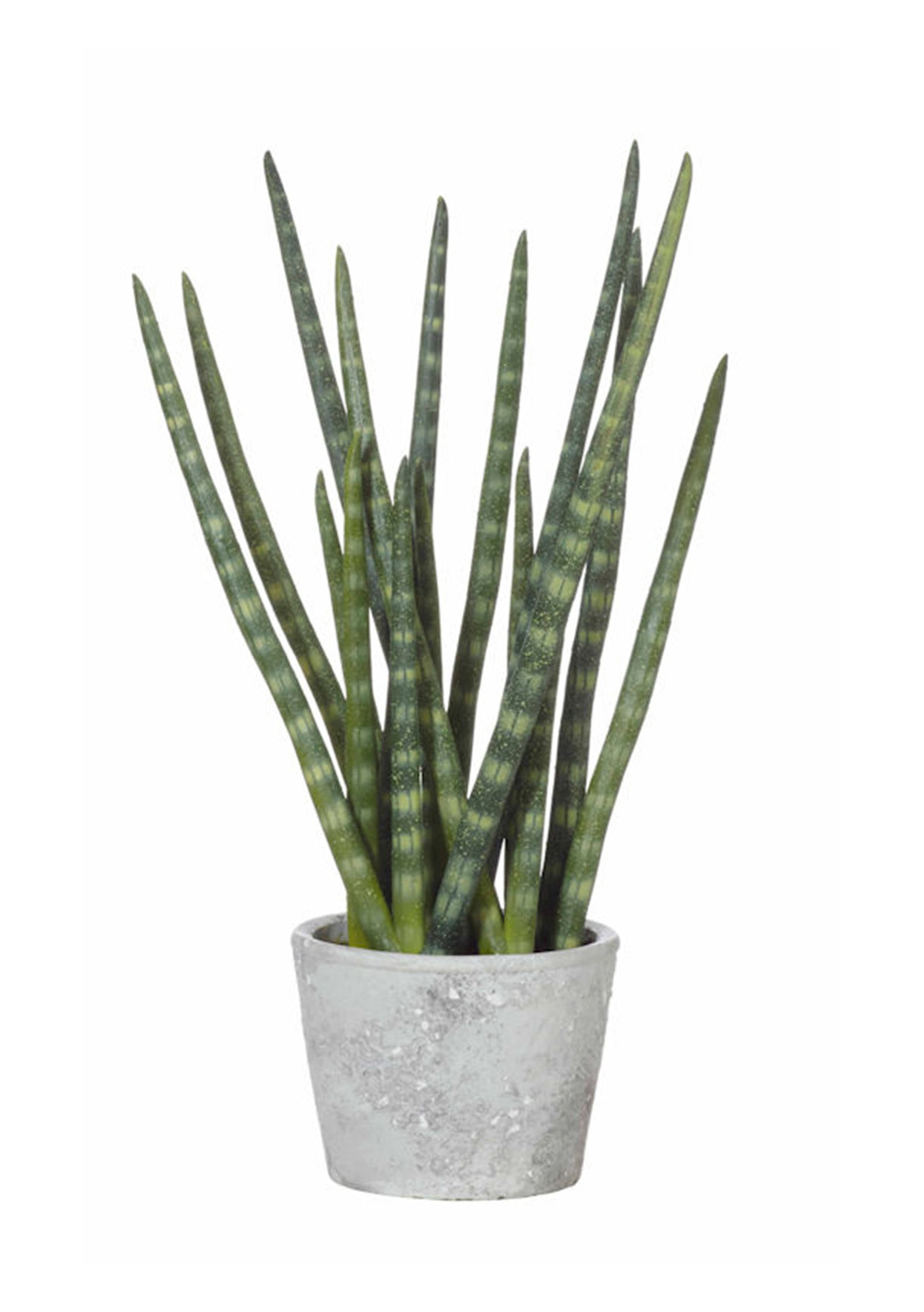 rogue - snaketail plant in pot - faux indoor plants & pots - onceit Faux Indoor Plants