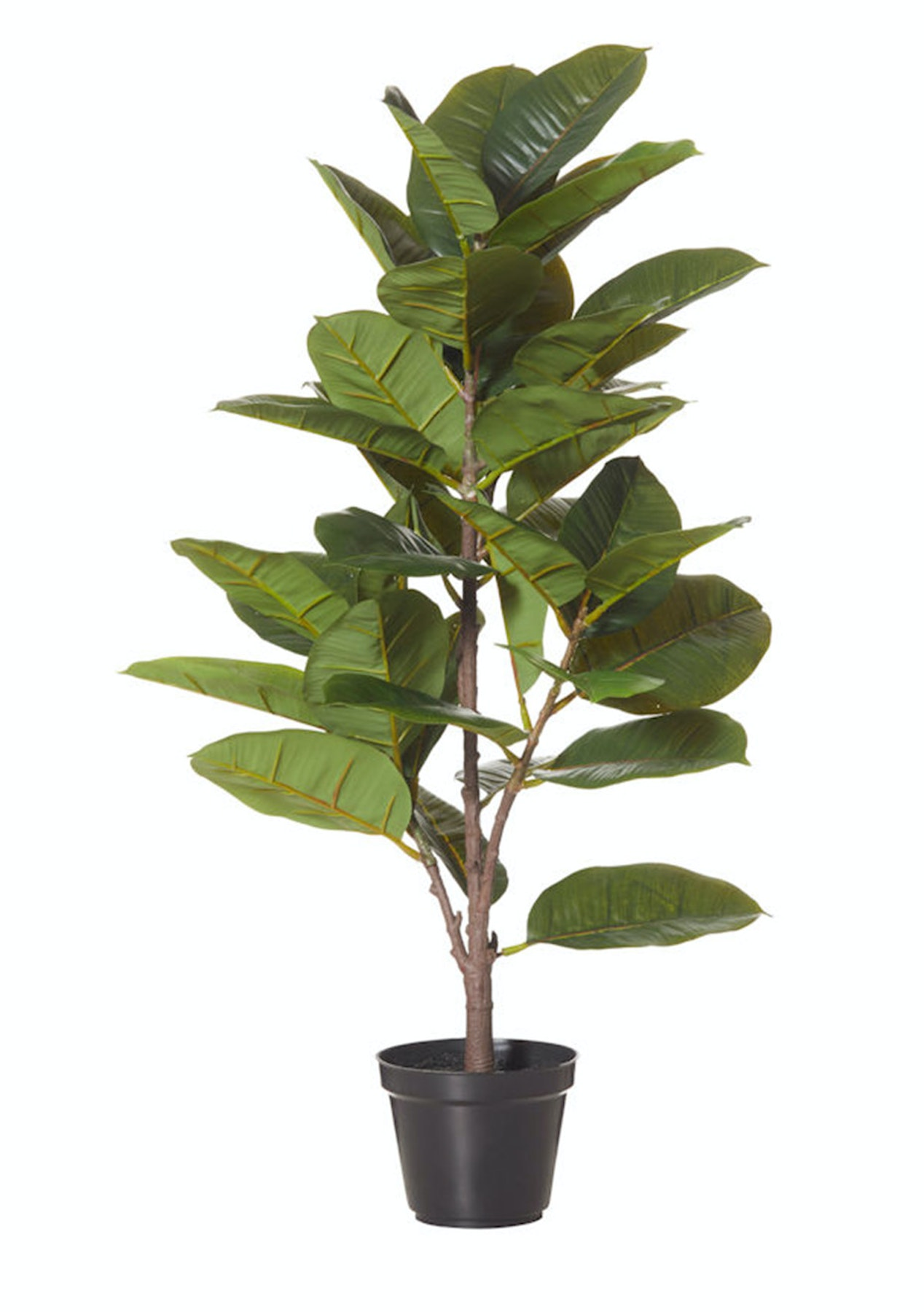 Albi - Rubber Plant-Garden Pot - 40x40x70cm - Stylish Gifts for the Home -  Onceit