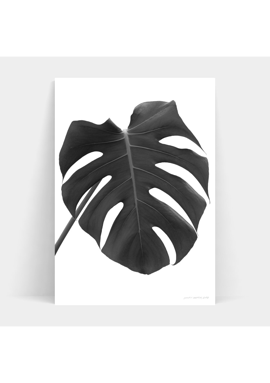 Simply Creative - Monochrome Monstera - A3 Monochrome Print