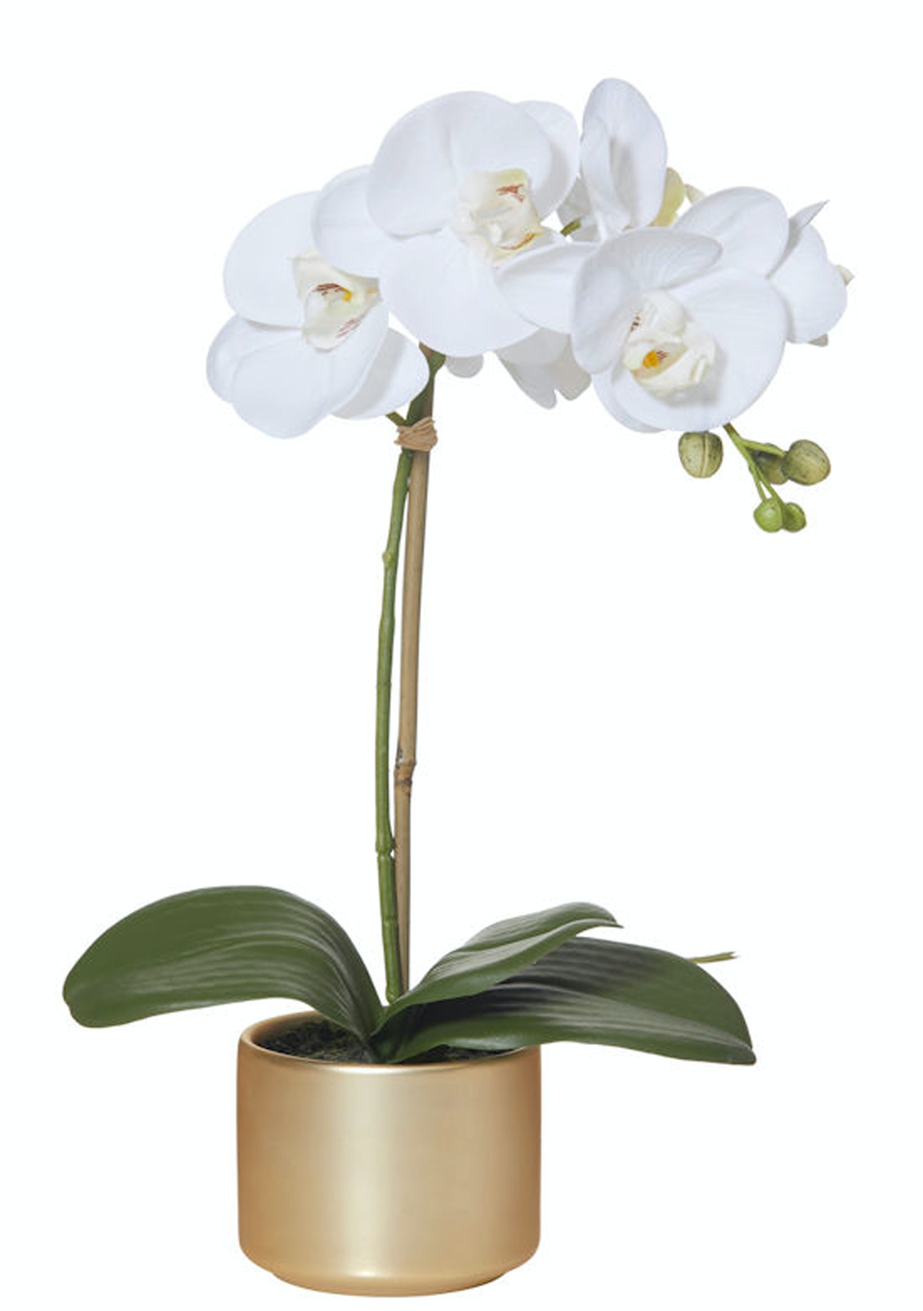 rogue butterfly orchid gold pot 14x24x41cm faux plants