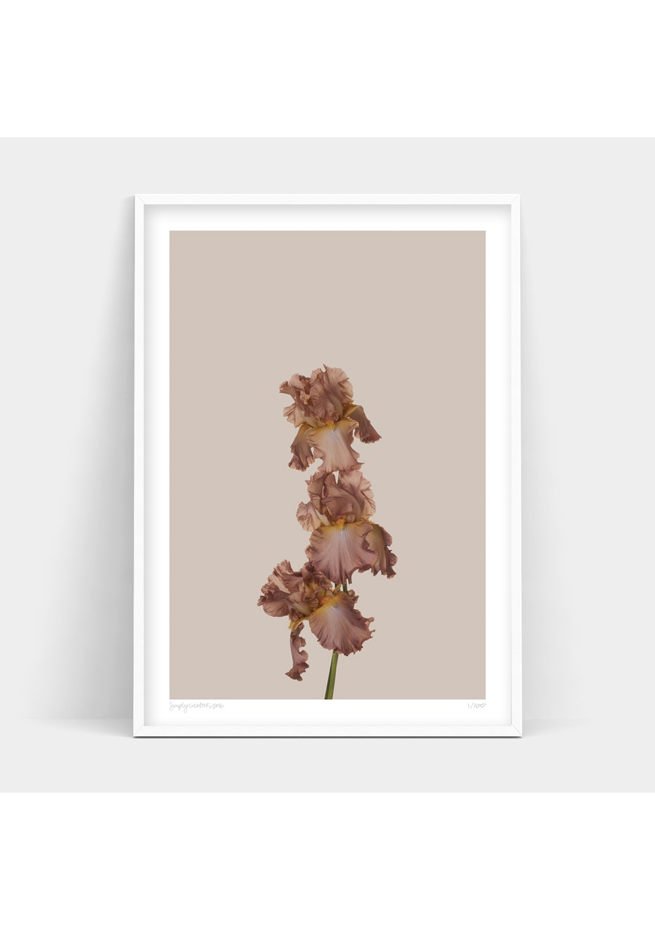 Simply Creative - Just Bloom - A2 Colour Limited Edition Print